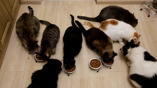 Many cats eating together Many cats eating together large group of objects stock videos & royalty-free footage