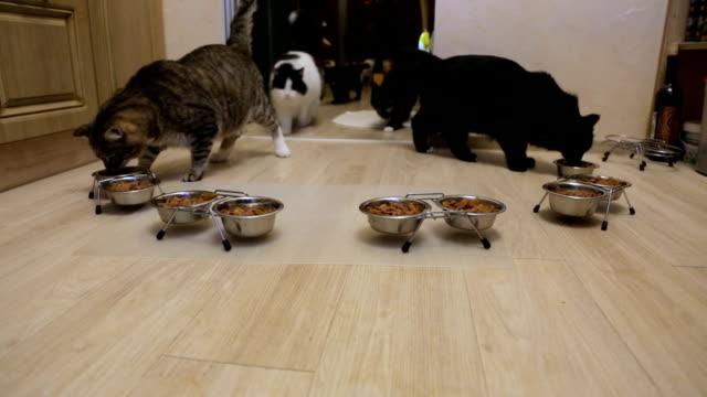 vídeos y material grabado en eventos de stock de muchos gatos comiendo juntos - un animal