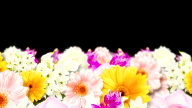 Many Colorful Flowers, Black Background, Loop Animation, Many Flowers Animation, Loop, floral pattern stock videos & royalty-free footage