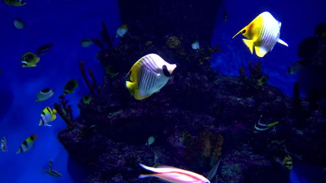 många olika fiskar flyter i en enorm vattentank mot blå bakgrund. fullhd - iktyologi bildbanksvideor och videomaterial från bakom kulisserna