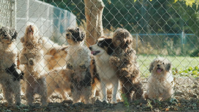 Many dogs of different breeds look through the net in a shelter or nursery Many dogs of different breeds look through the net in a shelter or nursery. 4K video group of objects stock videos & royalty-free footage