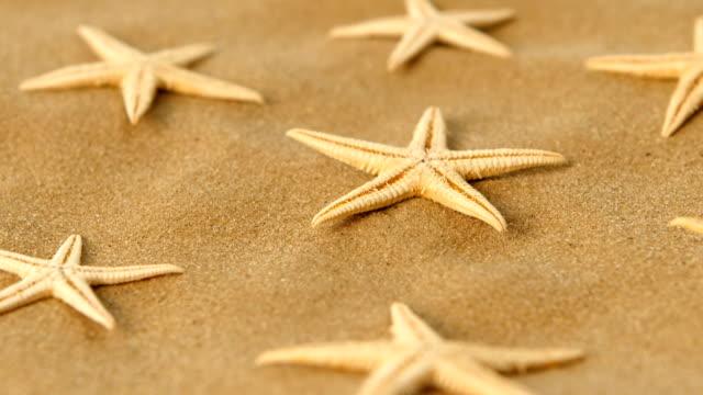 molti asciugati stelle marine sulla sabbia, rotazione - immerse in the stars video stock e b–roll