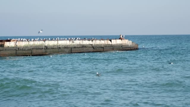 many gulls are sitting on the sea pier. - ornitologia video stock e b–roll