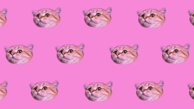 Many heads of cats on pink background. Minimal design Fun Art. Cat face background