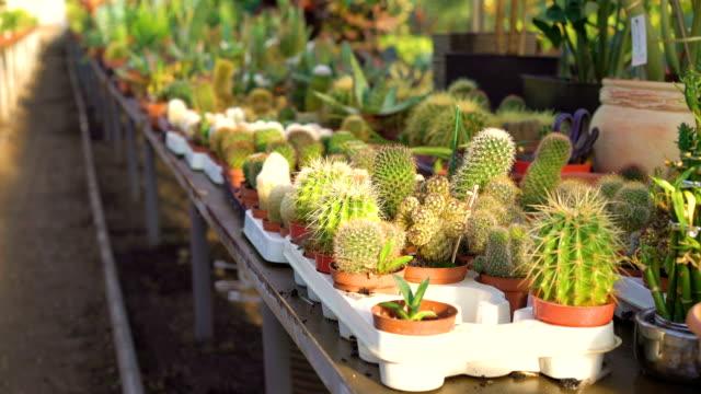 Muchas clases de cactus en el jardín de la casa FullHD - vídeo