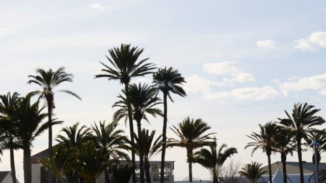 Many palm trees on coast. Travel holidays. video