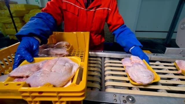 vídeos y material grabado en eventos de stock de muchas bandejas de espuma de poliestireno con pechugas de pollo enviadas sobre una cinta transportadora. - carne