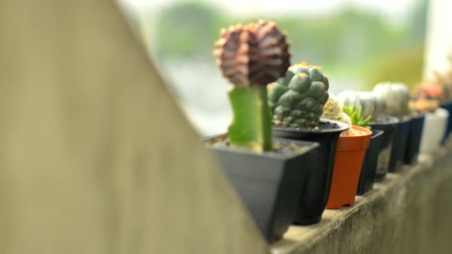 many types of cactus is on the edge video