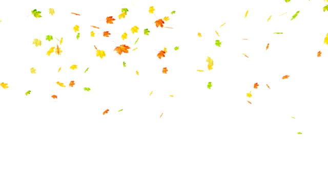 Maple Autumn Leaves Falling