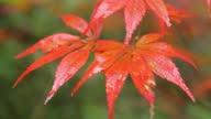 istock Maple leaf close-up 1282244440