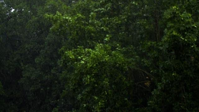 Ahornbäume in ein schweres Gewitter – Video
