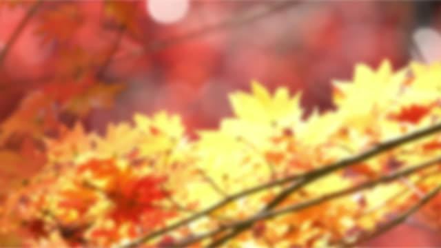 メープル材 - トヨタ点の映像素材/bロール