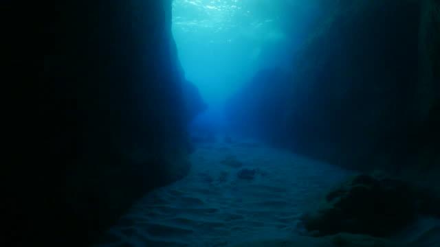 大理石射線在巨大的海底峽谷,大分,日本 - 深的 個影片檔及 b 捲影像