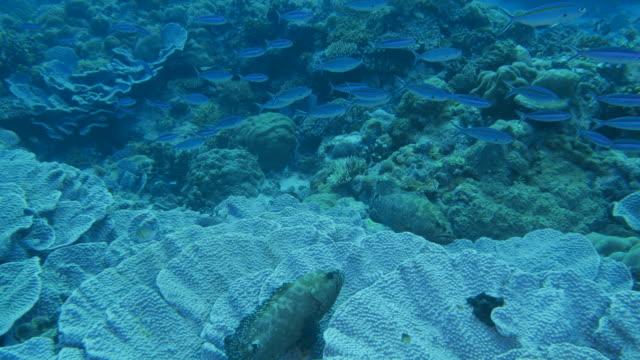 vídeos y material grabado en eventos de stock de pescado mero marmoleado, de peces fusilero - sea life park