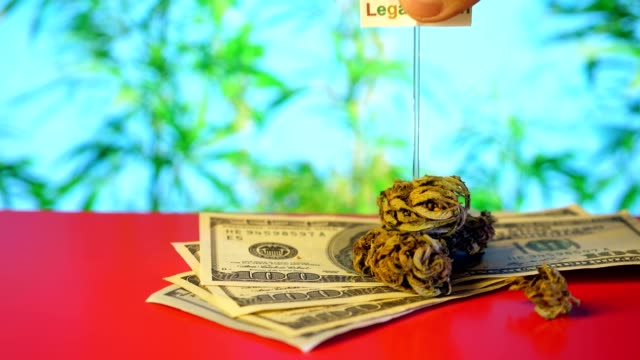 Marijuana 100 Dollars, money, inscription LIGALIZATION. Red background. Marijuana 100 Dollars, money, inscription LIGALIZATION. Red background. cbd oil stock videos & royalty-free footage