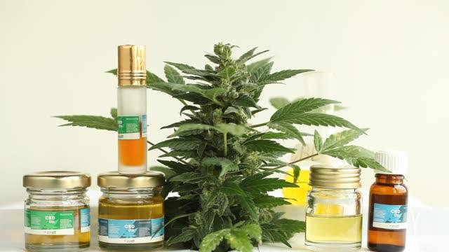 marijuana flower blooming medical cannabis plant video