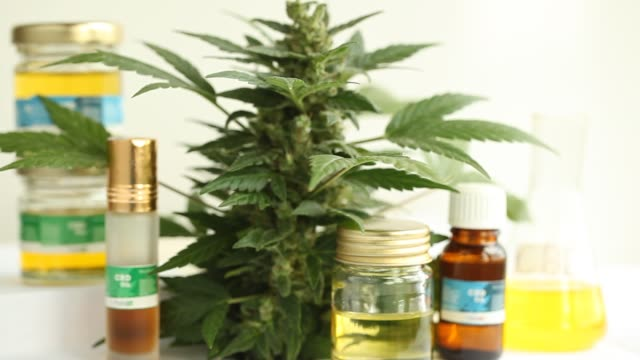 marijuana flower blooming medical cannabis plant marijuana flower blooming medical cannabis plant hashish stock videos & royalty-free footage