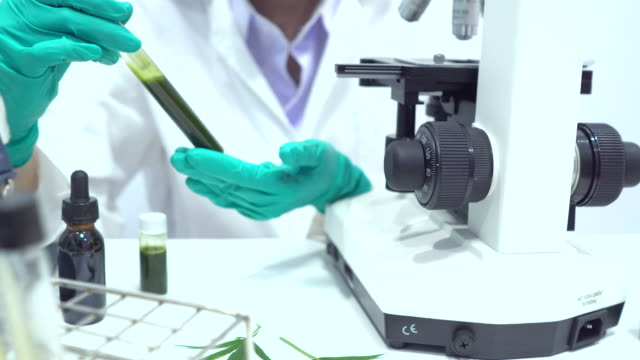 Marijuana research in the lab by scientist or doctor The scientist or doctor make herbal medicine from Marijuana in the laboratory on the table .alternative treatment. show hand and stethoscope. with the bottle container cbd oil stock videos & royalty-free footage