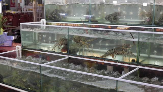 marine life caught in aquariums