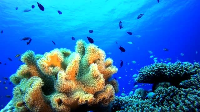 vídeos de stock, filmes e b-roll de jardim coral da vida marinha - equipamento de esporte aquático