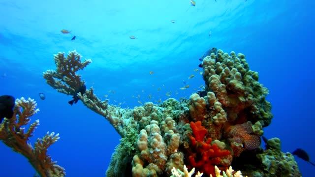 vídeos de stock, filmes e b-roll de cena do peixe da vida marinha - equipamento de esporte aquático
