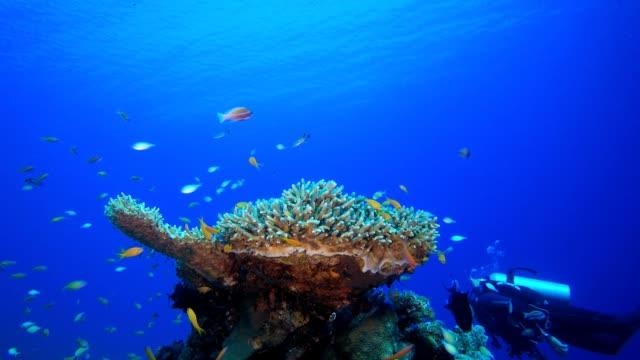 vídeos de stock, filmes e b-roll de marine life tropical fish garden e diver - equipamento de esporte aquático