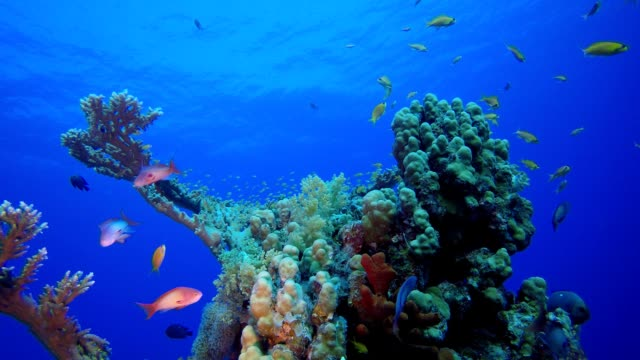 vídeos de stock, filmes e b-roll de jardim de peixes tropicais da vida marinha - equipamento de esporte aquático