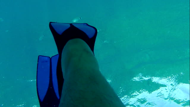 Marine life video