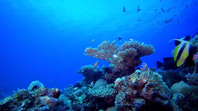 Marine Tropical Underwater Fish Garden Underwater sea waves. Tropical blue sea water. Coral garden seascape. Blue water background. Tropical underwater bubbles. Surface sea water. Underwater tropical reef coral. aquatic organism stock videos & royalty-free footage
