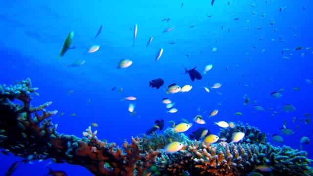 Marine Underwater Tropical Fish Garden Tropical fish reef marine. Soft-hard corals seascape. Vibrant coral garden. Reef coral scene. Beautiful soft coral. Sea coral reef. Soft coral broccoli. Coral scene aquatic organism stock videos & royalty-free footage