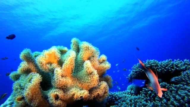 vídeos de stock, filmes e b-roll de jardim de peixes tropicais subaquáticos marinhos - equipamento de esporte aquático