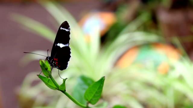 mariposa buterfly 13 - vídeo