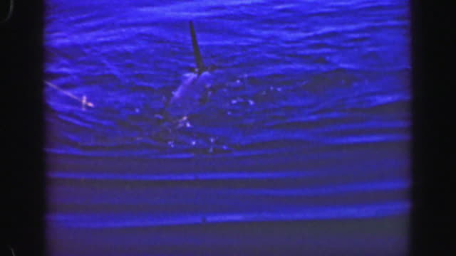 1952: marlin sailfish trophy sized billfish caught pulled aboard fishing boat. - guerrero video stock e b–roll