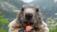 istock Marmot eating carrot on the background of Furkapass 1157939518
