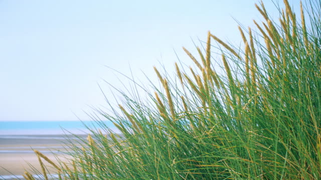 marram grass and blue sky and sea. copy space. lockdown. - тростник стоковые видео и кадры b-roll