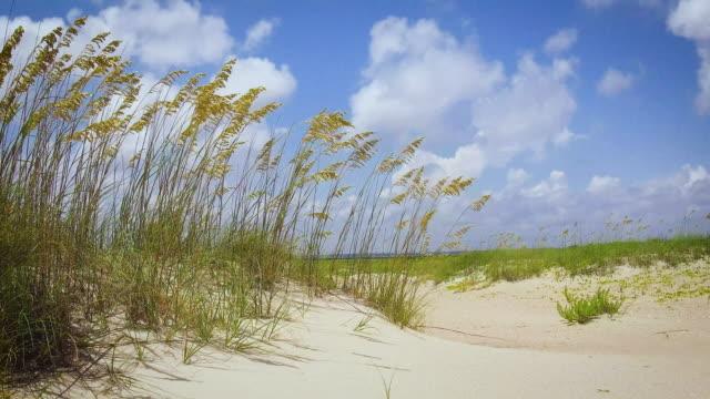 Marram Grass Blowing In The Breeze