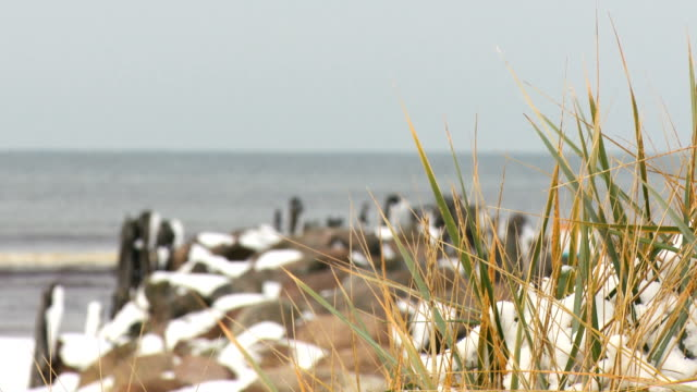 Bидео Marram grass covered with snow Winter period at Baltic Sea coast