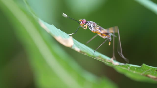 marsh fly staying on the plant a marsh fly is staying on the plant animal antenna stock videos & royalty-free footage