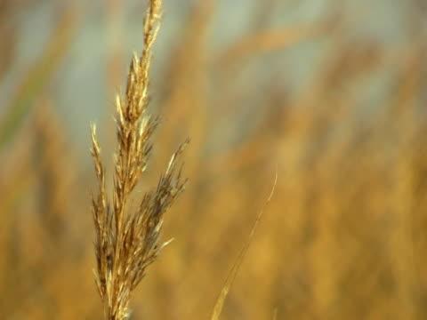 stockvideo's en b-roll-footage met marsh grass - natuurgrond