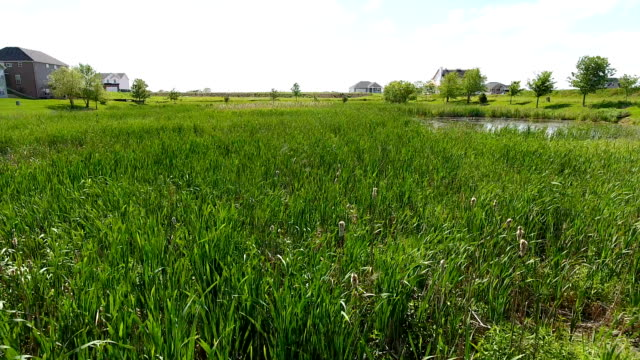 Marshland grass pond fly over Grass and Marsh fly over with new and existing homes in the background marsh stock videos & royalty-free footage