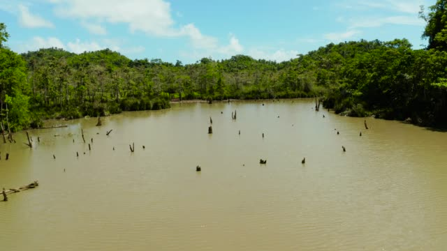 Marshland in the rainforest. Siargao,Philippines