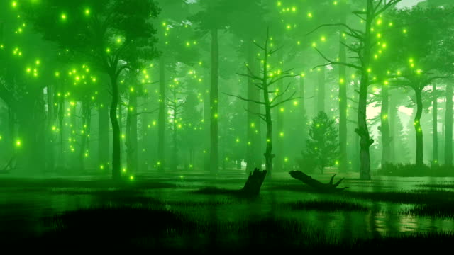 marshy night forest with mystic firefly lights - fata video stock e b–roll