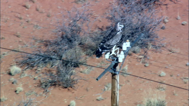 martial eagle on telegraph pole - Aerial View - Northern Cape,  South Africa video