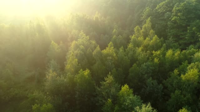 Marvellous view of green forest during sunrise. Flying over trees' tops. Sunrays getting through. Aerial shot, 4K Marvellous view of green forest during sunrise. Flying over trees' tops. Sunrays getting through. Aerial shot, 4K trees in mist stock videos & royalty-free footage