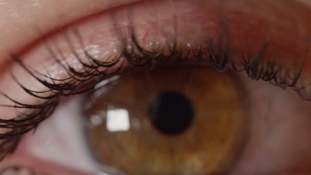 MACRO DOF: Mascara wearing girl with pretty amber eyes stares without blinking. video