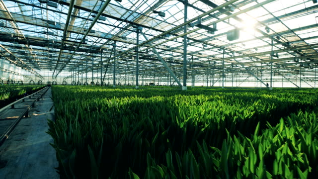 Massive greenhouse with lots of unexposed flowers