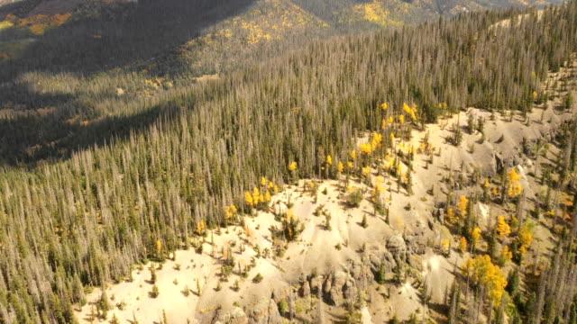 vídeos de stock, filmes e b-roll de floresta maciça do pinho em colorado por zangão - condado de pitkin
