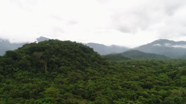 Mata Atlantica - Atlantic Forest in Brazil Rainforest brazil stock videos & royalty-free footage