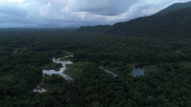 Mata Atlantica - Atlantic Forest in Brazil video