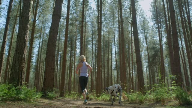 Eine reife erwachsene Frau, die mit ihrem Hund durch einen sonnigen Kiefernwald läuft – Video